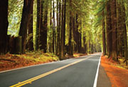 Highway running through wooded area